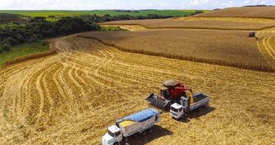 colheita soja belterrra