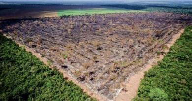 Desmatamento na Amazônia Legal atinge 797 km² em maio- Pará responde por 40%