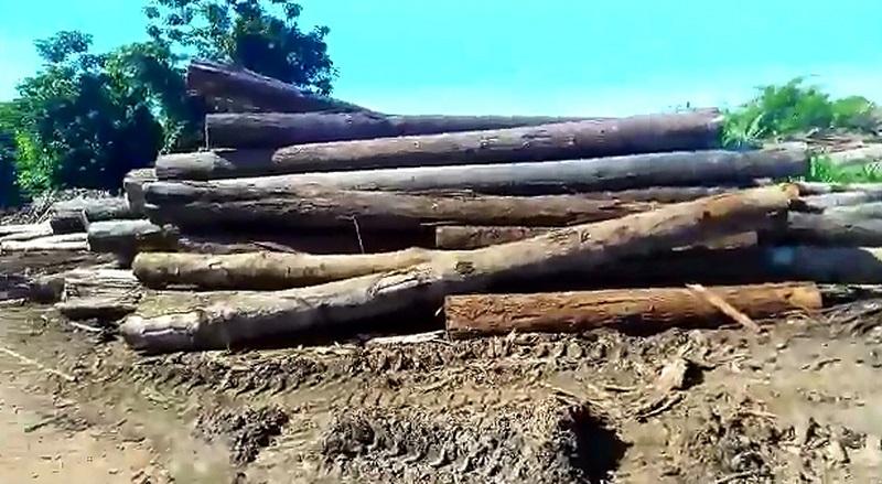 Três madeireiras foram embargadas por desmate irregular — Foto: Arquivo pessoal
