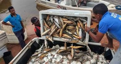 pescado-apreendido