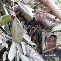 Trabalhador morre ao ser atingido por tronco de árvore em Novo Progresso