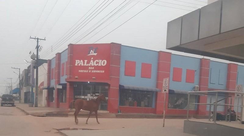 Cavalo é flagrado solto pela Avenida João Atiles em Novo Progresso.