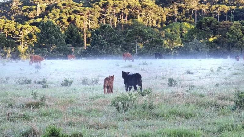 Frio e geada mudaram a paisagem dos campos na Serra catarinense — Foto: Mycchel Legnaghi/ São Joaquim Online