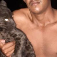 Filhote de onça preta perdido é resgatado por moradores da zona rural em Novo Progresso