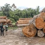 Semas emite notificações por desmatamento ilegal em Novo Progresso e outros 12 municípios