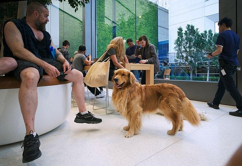 Tendência de locais pet friendly cresce e atrai clientela cada vez maior