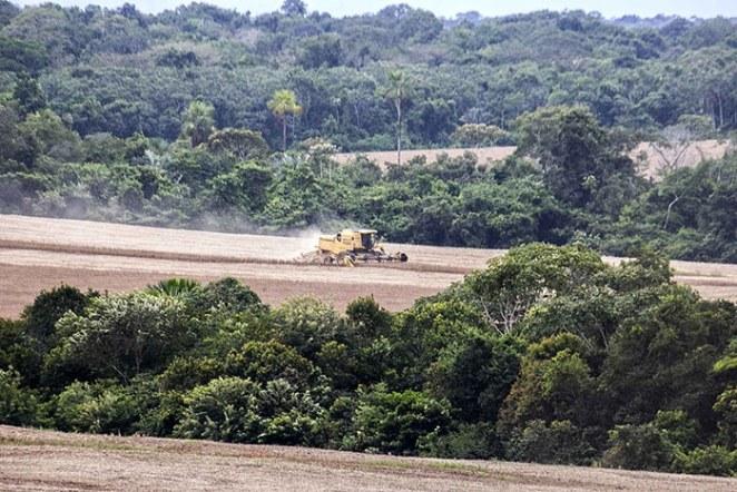 77% dos agrotóxicos comprados pelo Brasil são da Syngenta (Foto: Pedro Biondi/Repórter Brasil)