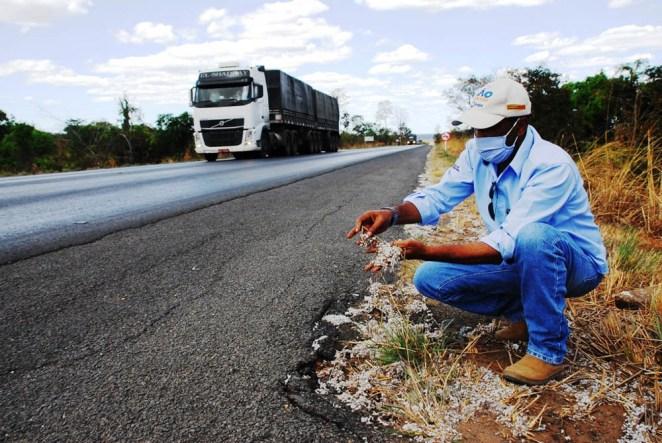 Antonio Carlos, o coordenador do Programa Fitossanitário do Algodão destaca que é uma atividade que não pára. Sempre atento e atuando na limpeza das estradas (Foto: Divulgação)