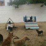 Novo CCZ inicia programa de castração de cães e gatos