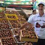 Festa do Inhame é opção para o fim de semana em Alfredo Chaves