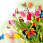 """Primavera encerra a série """"Concerto das Estações"""""""