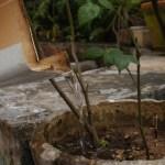 Aedes aegypti: depósitos continuam concentrados no ambiente doméstico