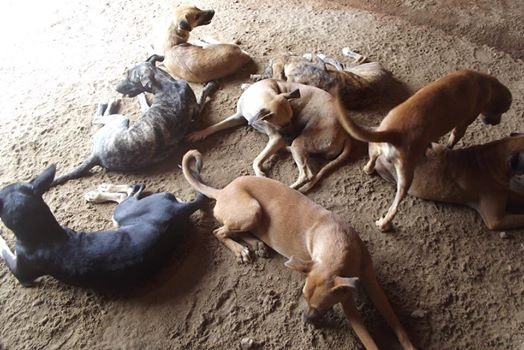 APPA já está com quase 300 animais e pede ajuda para a compra de ração