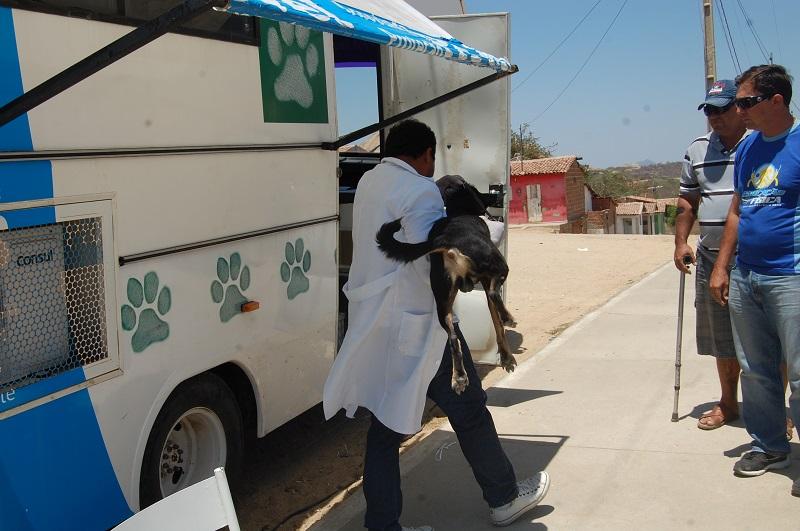 Castramóvel faz 20 cirurgias e vacina 120 animais contra raiva no Mutirão