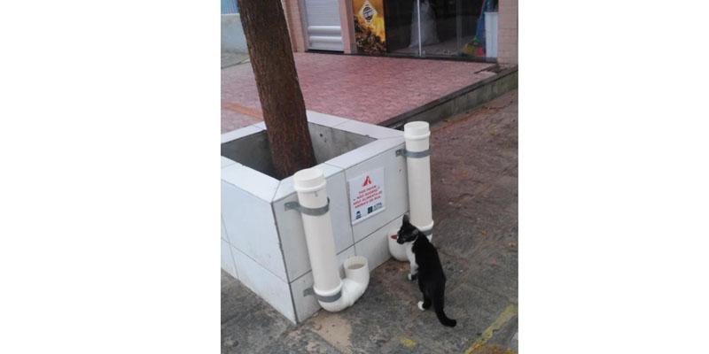 APPA continua implantando comedouros para animais de rua em Patos