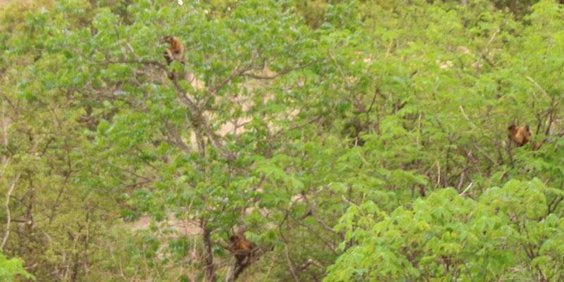Macacos estão roubando a cena na Pedra do Tendó
