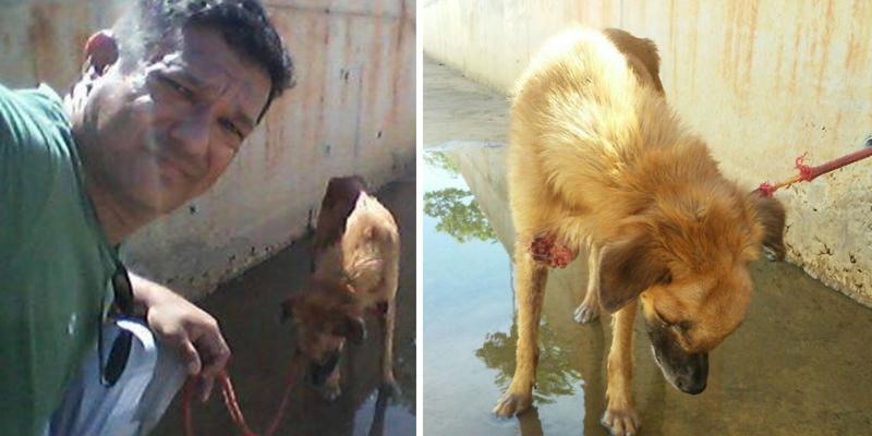 Cachorro doente é jogado no Canal do Frango para que morra. Patrian, presidente da APPA, o resgata