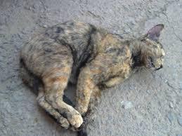 Crueldade! Cães e gatos estão sendo envenenados em Várzea