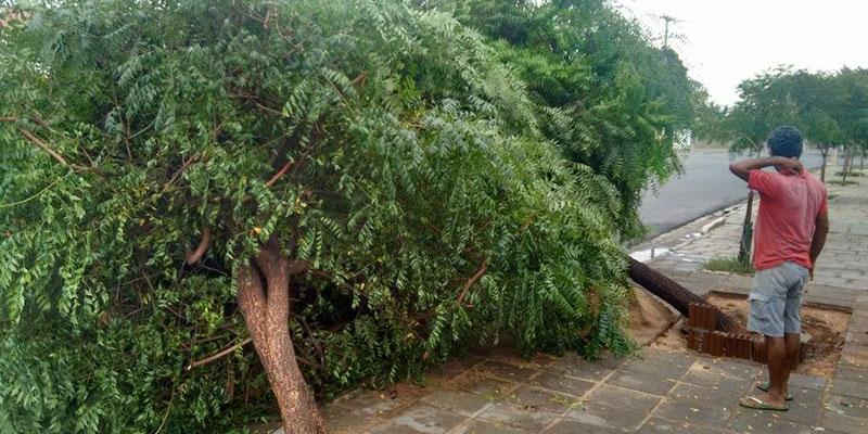 Duas árvores caem em frente de uma residência, em Patos