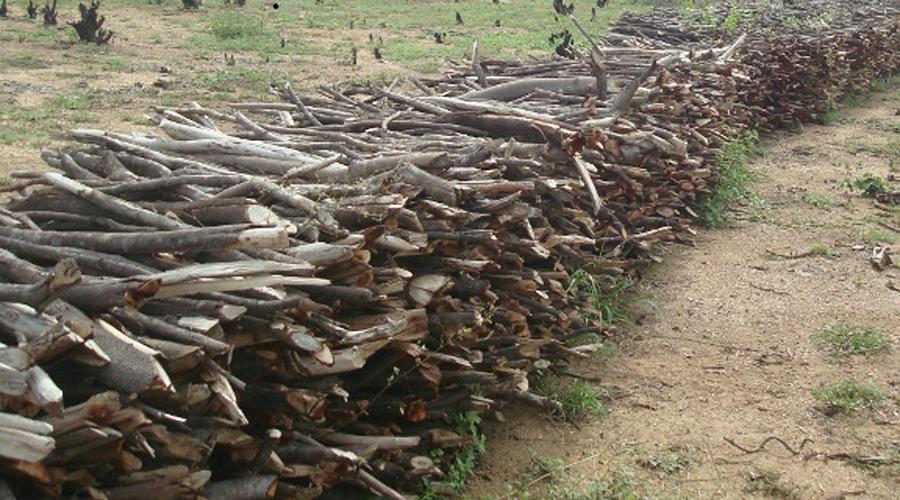 Sudema intensifica fiscalização no comércio de lenha para fogueiras