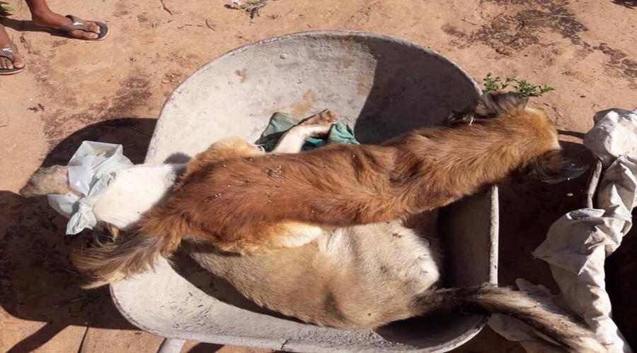 Sargento pede ajuda da população para tentar descobrir quem está envenenando os cachorros em Teixeira