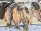 peixes (2)