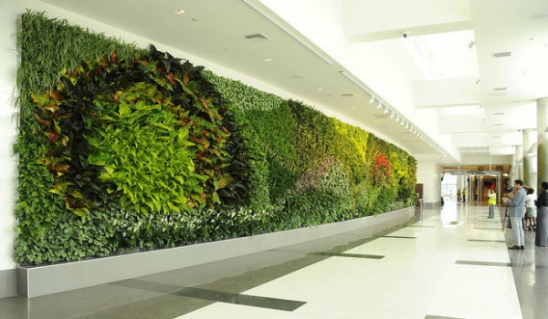 Living Green Wall Design For Commercial And Residential Buildings Orlando FL From Foliage