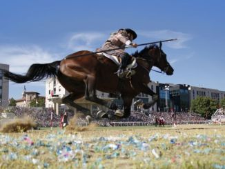 Cavallo morto, WWF chiede ai NAS dei Carabinieri il sequestro e l'esame autoptico