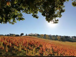 Formaggi e vini doc e dogc nei weekend della Strada del Sagrantino