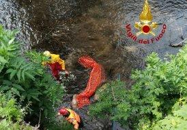 Due caprioli morti trovati nel fiume a Pale di Foligno, recuperati dai vigili del fuoco
