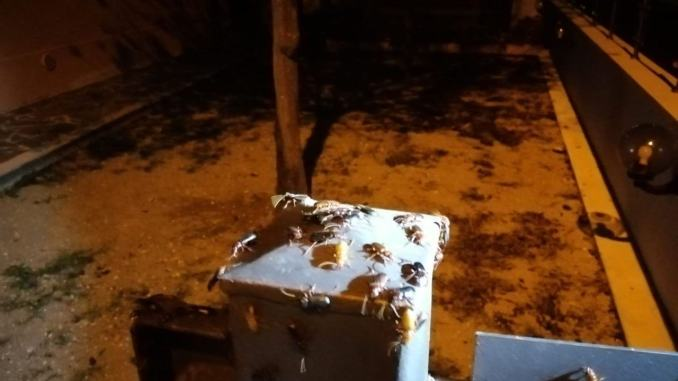 Scarafaggi a Budino di Foligno, famiglie stremate, bimbi terrorizzati |Video e fotogalley