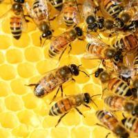 Foligno, dal 15 al 17 novembre torna Mielinumbria il festival dell'apicoltura