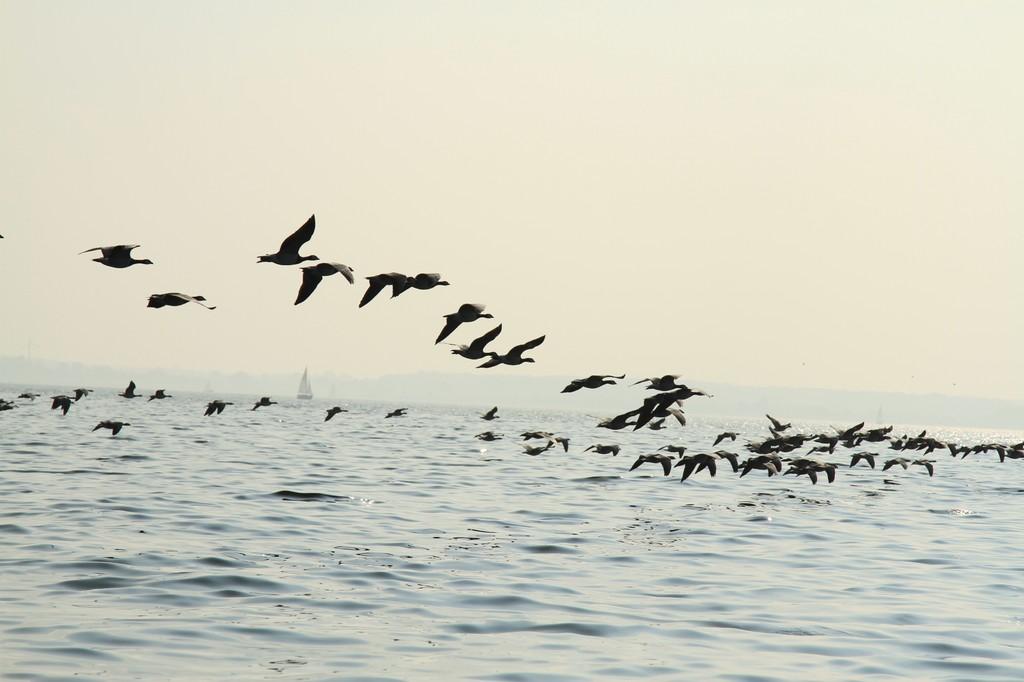 Zugvögel überall!