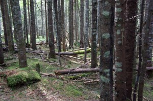 hopewell-woods