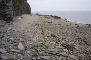 immense-fossil-beach