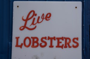 live-lobsters