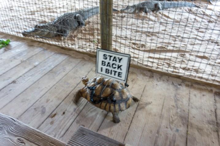 gator show schildkröte