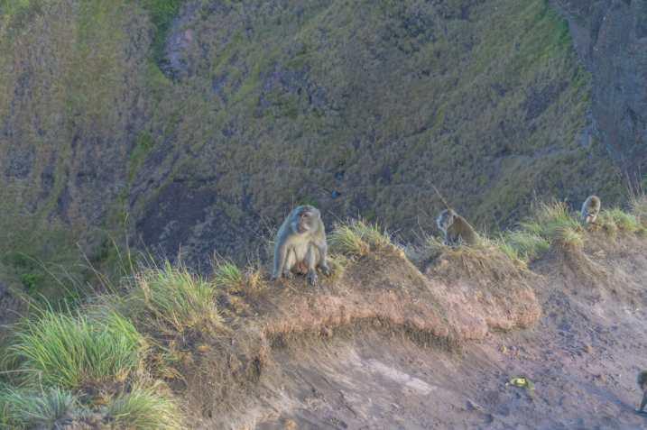 Batur Affen 1