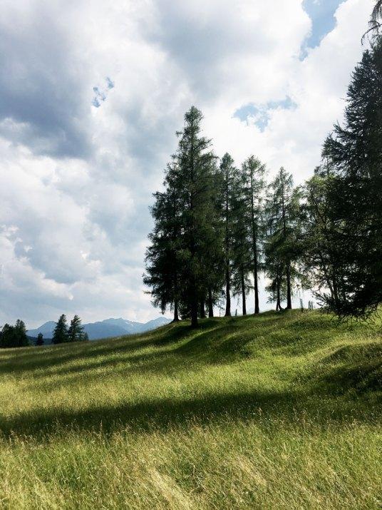 Wald-Naturtage-Seefeld-Tirol