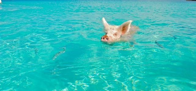 Top 5 Best Things To Do In The Bahamas