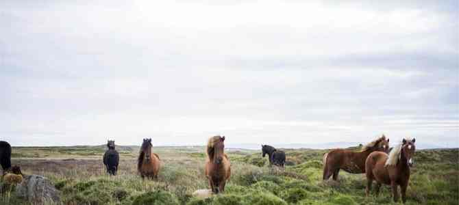 Top 10 Animals In Iceland You May See During Your Trip