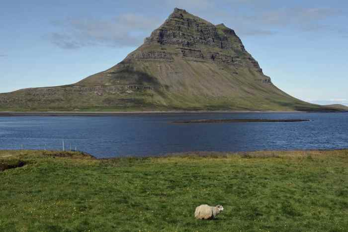 top animals in iceland and best wildlife in iceland