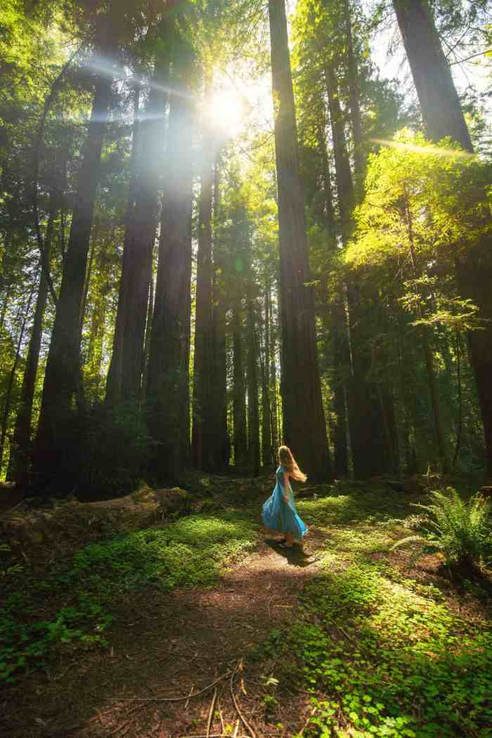 Visit Redwoods National Park in Northern California on a road trip   California redwoods   avenue of the giants   redwoods travel #california #redwoods