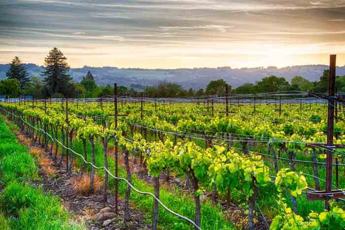 enjoy sunset during one of these San Francisco wine tours to Napa Valley