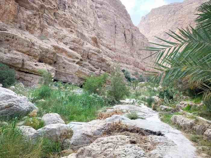 Shaded hike in Wadi shab
