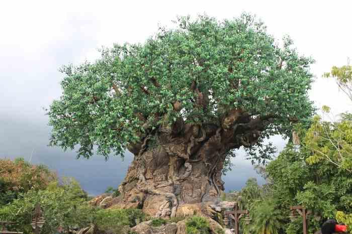 Afternoon storm at Animal Kingdom at Disney World
