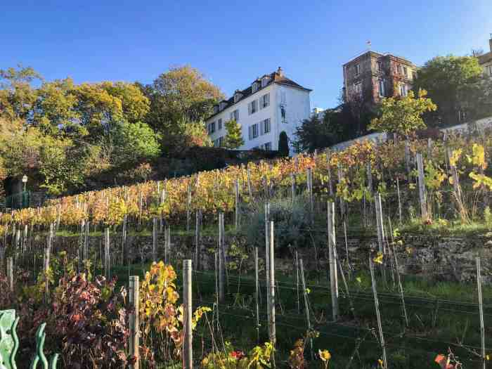 one of the strangest hidden gems in Paris Montmartre Vineyard is found on the city streets