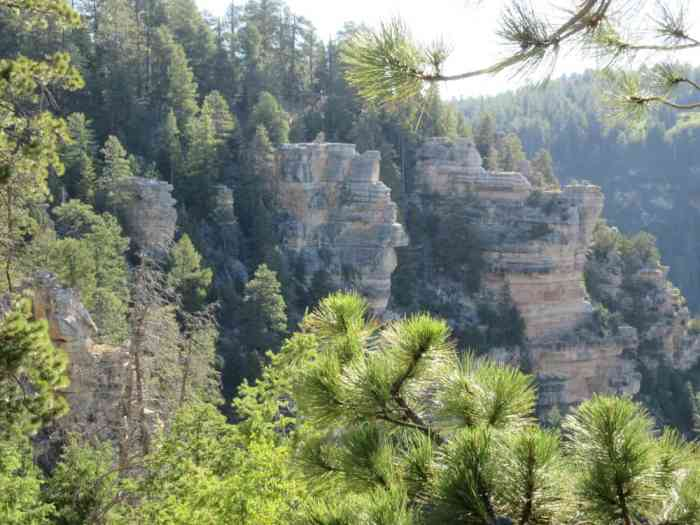 the Widforss Trail is one of the more educational Grand Canyon hikes