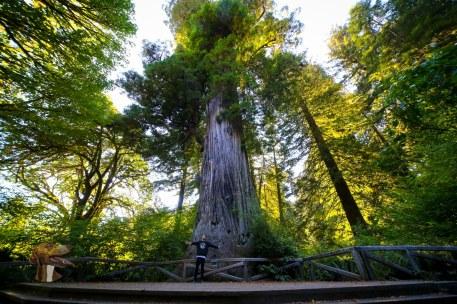 Alex at Big Tree in Redwoods National Park