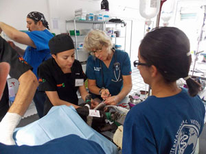 veterinary training in spay neuter surgery